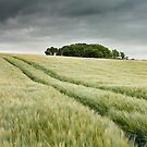 Fields of barley by Brian  Moriarty