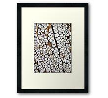 Ceramic Clay Fungi Framed Print