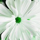 Green Centered Daisy by Sharon Woerner