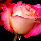THINK PINK~ by RoseMarie747