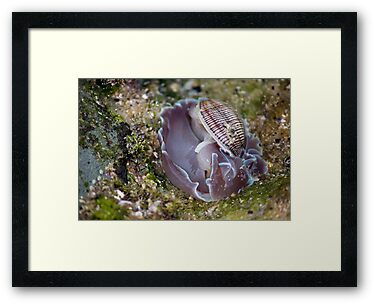 On The Rocks Series - Strange Shellfish by reflector
