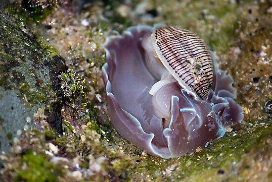 On The Rocks Series - Strange Shellfish by reflector