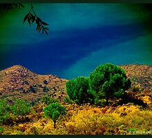 Hills and Trees of Catalonia (i) - (Spain) by PhotoMairo