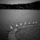 gulls day off by Glenn Browning