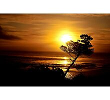 LEANING TREE Photographic Print