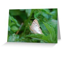 White butterfly on green leaf Greeting Card