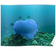 Blue Anemone (closed) Poster