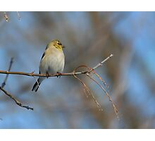 Singing tree Photographic Print