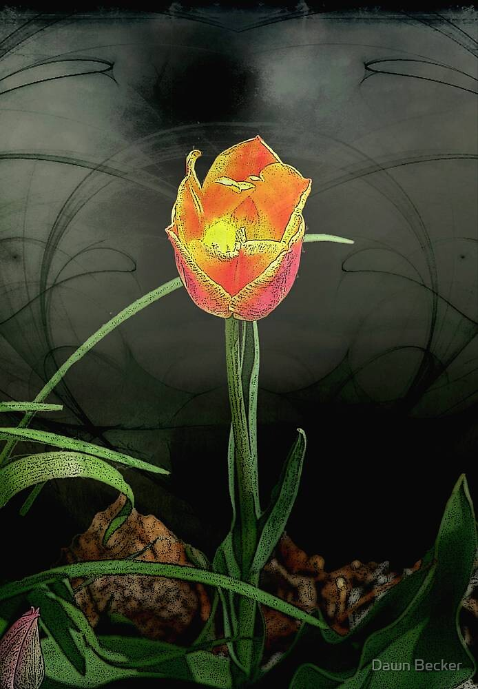 Lone Tulip © by Dawn M. Becker