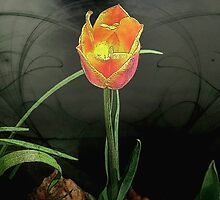 Lone Tulip © by Dawn M. Becker