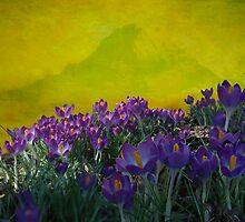 Spring in Washington State by Jeff Burgess