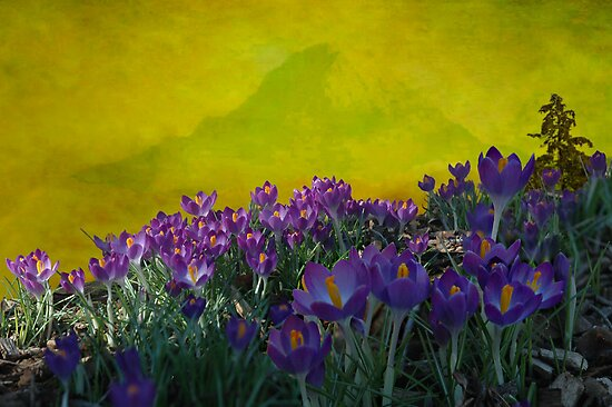 Spring in Washington State by Jeff Burgess