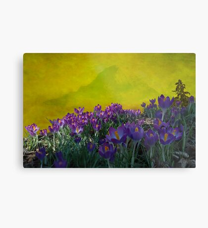 Spring in Washington State Metal Print