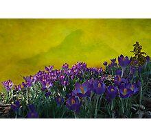 Spring in Washington State Photographic Print