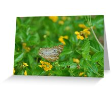 White butterfly on yellow flowers Greeting Card