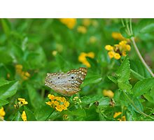 White butterfly on yellow flowers Photographic Print