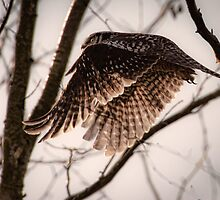 Owl in the Trees by David Friederich