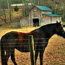 It's MY Barn! by Chelei