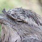 Thoughtful Frogmouth by dilouise