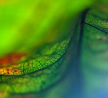 Within an Autumn Leaf #1 by Su Walker