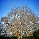 Tree, Eltham Palace by Lisa Hafey