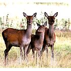 Oh Deer by Pixelbloke
