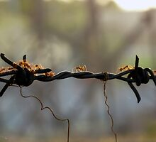 Ants on a wire by Digby