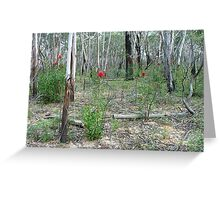 Waratahs in the woodlands Greeting Card