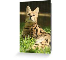 Honolulu Zoo: The Serval Greeting Card