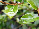 Leaves in the Rain by TREVOR34