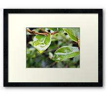 Leaves in the Rain Framed Print