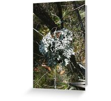 Lichen on tea-tree in Newnes Greeting Card