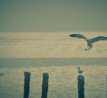 Request for landing - Revisited by NicoleBPhotos