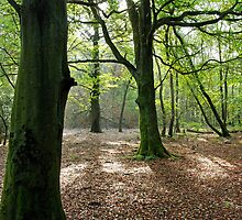 Woodland, Reigate Hill, Surrey by physiognomic