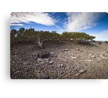 mangroves, roebuck bay Canvas Print