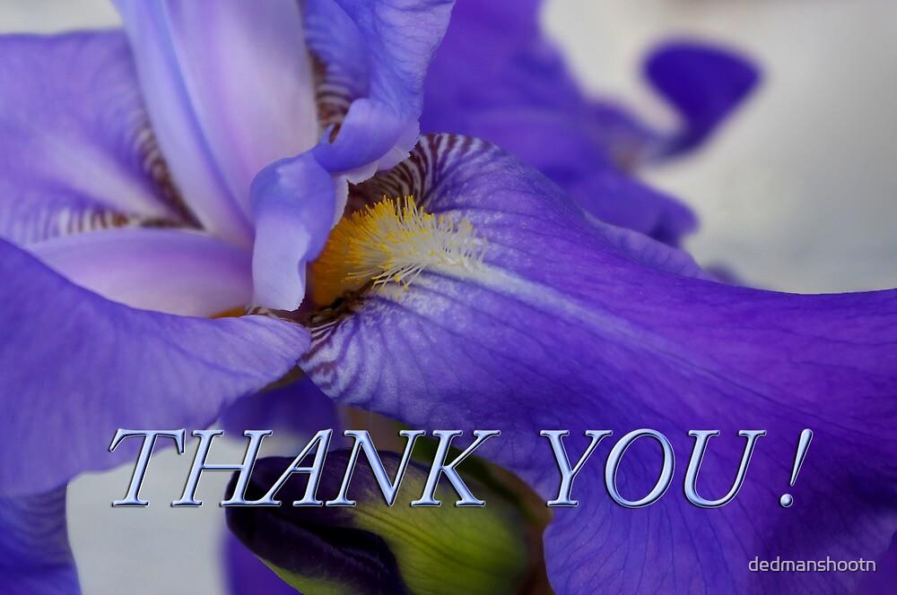 iris thank you by dedmanshootn