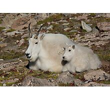 Mother and child Mountain Goat Photographic Print