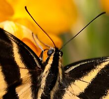Butterfly1 by J. Day