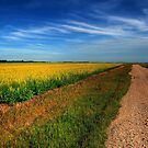 Canola Country by Larry Trupp