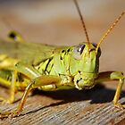 Sun Tanning Grasshopper by KevinsView