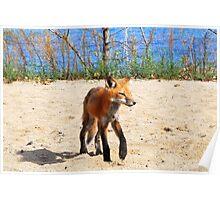 Lake Michigan Fox Poster