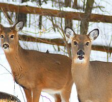 Deer - Mother Daughter Bond by KevinsView