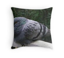 Pigeon on my Sill Throw Pillow