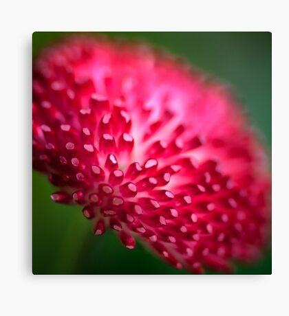 Pink and Green Flower Macro Canvas Print
