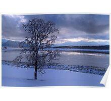 Winter tree-I Poster