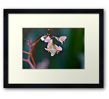Delicate but Strong Framed Print