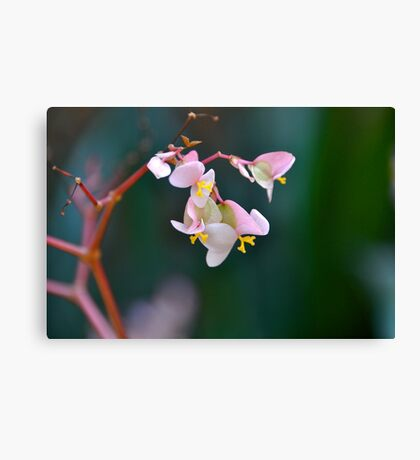 Delicate but Strong Canvas Print