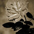 Rustic Rose by Stormygirl
