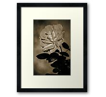 Rustic Rose Framed Print