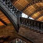 Natural History Museum  by Les Forrester